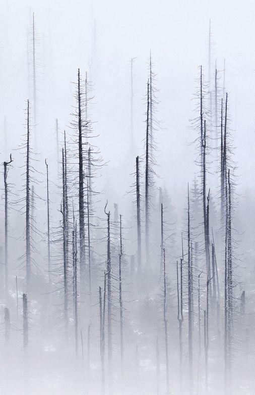 © Kilian Schönberger   Cloud Forest (Detail), 2013