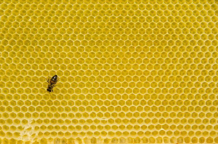 Pčelinje saće - sveta geometrija | Zlatni presek / Sveta ...