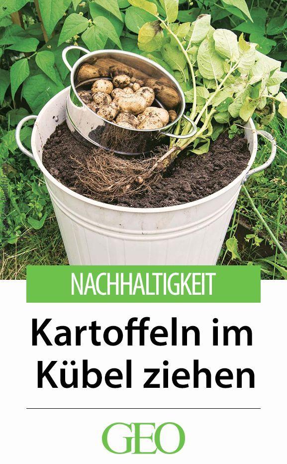 Kartoffeln Im Kübel Pflanzen