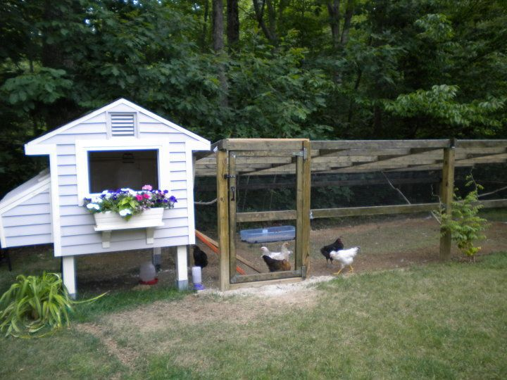 Site has a lot of chicken coop plans.: Backyard Chicken, Backyard Farms, Chicken Running, Backyardchicken Com, Chicken Coupe, Chicken Coops Plans, Chicken Community, A5Ftfuri Chicken, Window Boxes