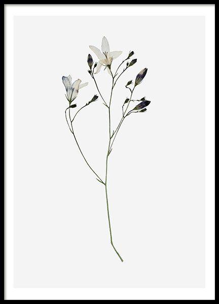 Campanula Flower, poster i gruppen Posters och prints hos Desenio AB (8496)
