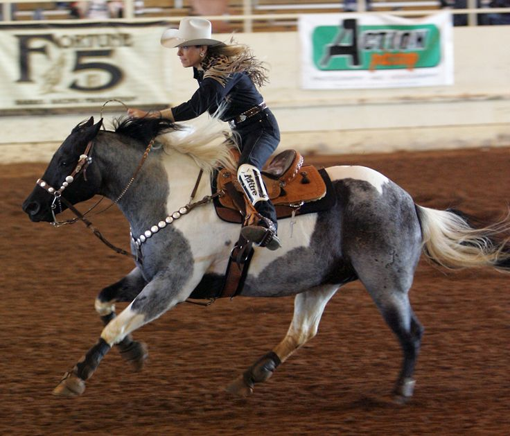 Blue Tobiano...American Paint Horse is a breed of horse that combines both the conformational characteristics of a western stock horse with a pinto spotting pattern of white and dark coat colors. Developed from a base of spotted horses with Quarter Horse and Thoroughbred bloodlines, the American Paint Horse Association (APHA) breed registry is now one of the fastest-growing in North America.