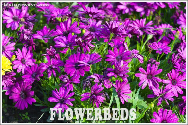 6 flowerbeds textures added texturewave.com