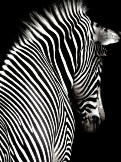 Inspiration for the herd at Zebras!