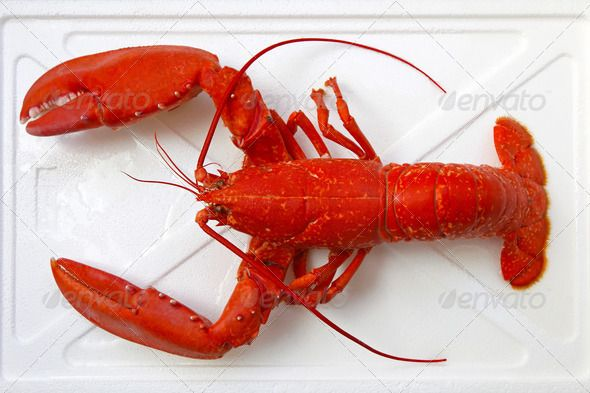 Realistic Graphic DOWNLOAD (.ai, .psd) :: http://hardcast.de/pinterest-itmid-1007004568i.html ... Lobster ... animal, clawed, claws, cooked, crustaceans, food, lobster, marine, orange, seafood, shellfish, steamed ... Realistic Photo Graphic Print Obejct Business Web Elements Illustration Design Templates ... DOWNLOAD :: http://hardcast.de/pinterest-itmid-1007004568i.html