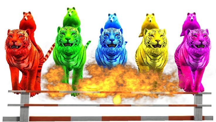 Learn Color with Tiger and Bear Finger Family      Colors Animals Finger...