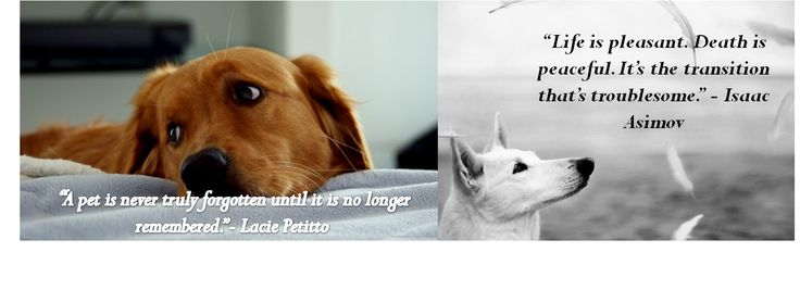 loss quotes fun pets lead losing a pet quotes losing a dog quotes ...