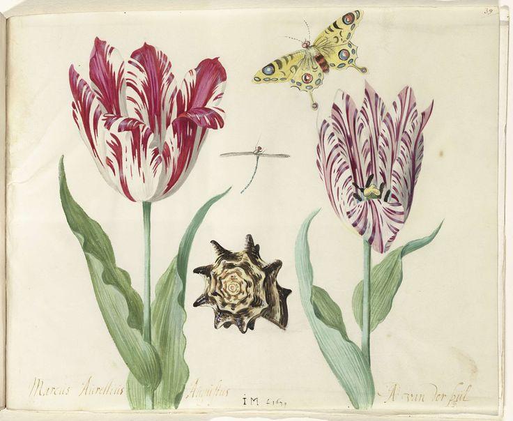 Twee tulpen, een schelp, een vlinder en een libel, Jacob Marrel, 1637 - 1645