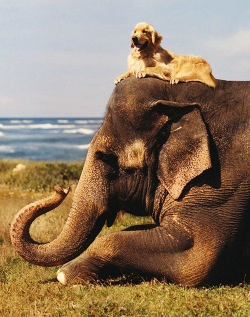 Dog and elephant, best friends.