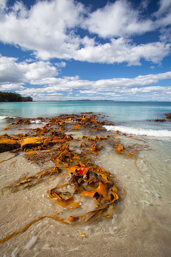 Adventure Bay - Bruny Island, Tasmania, Australia