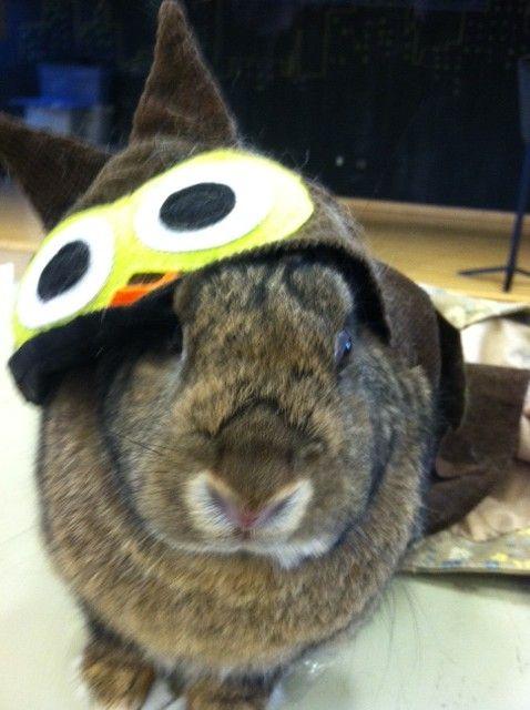 Bunny is an owl for Halloween - October 31, 2012