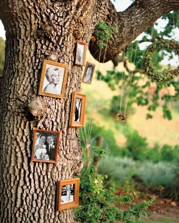 A massive oak hung with photos serves as a family tree