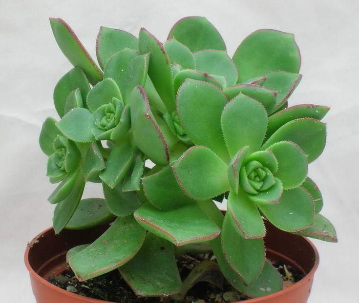 Les 25 meilleures id es de la cat gorie noms de cactus sur for Recherche plante