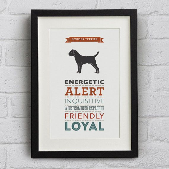 Border Terrier Dog Breed Traits Print - Border Terrier Gift