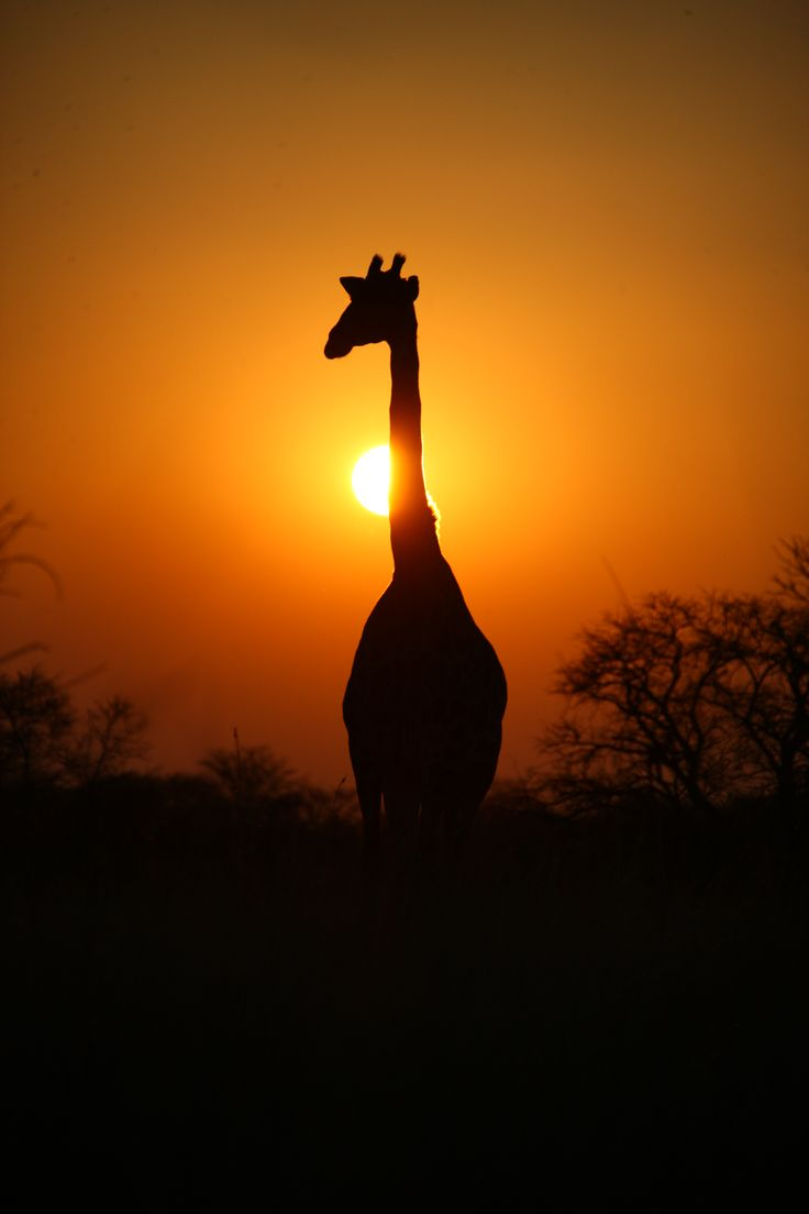 Travel with Global Family Travels to see the beauty of Africa's wild life!