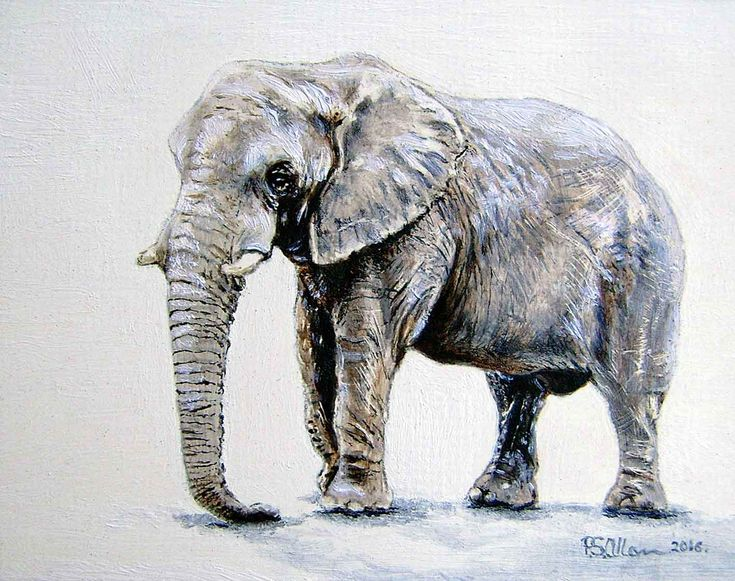 """African Elephant"" - Oil on canvas - 55x70mm - 2016"