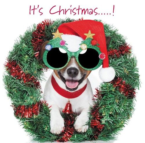 31 best Dog Christmas Cards images on Pinterest Dog christmas - blank xmas cards