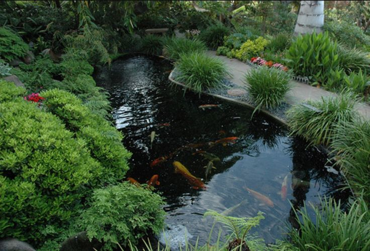 32 best images about pool to pond on pinterest gardens for Koi pond pool