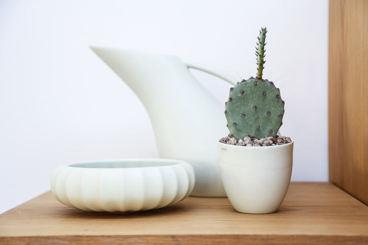 Bowl, jug and cup from the norwegian brand MENT. Cactus from Kaktus Kbh.  Photo by Sonoma Seven / www.sonomaseven.dk