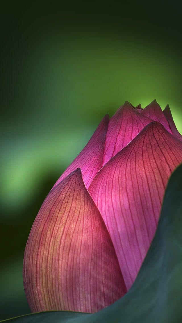 flower closeup iPhone 5s wallpaper