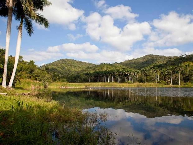 Cuba's Green Revolution: How Las Terrazas has flourished - Americas - Travel - The Independent