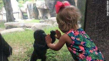 Baby gorilla and baby girl make an adorable connection  - CNN.com