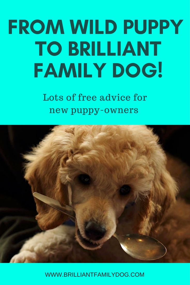 Puppy Training: How to turn your wild puppy into your Brilliant Family Dog - FREE EMAIL COURSE here | www.brilliantfamilydog.com