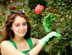 Mehltau und andere Pilzerkrankungen bei Rosen lassen sich durch vorbeugende Maßnahmen verhindern. Befallene Pflanzen sind meist zu retten.