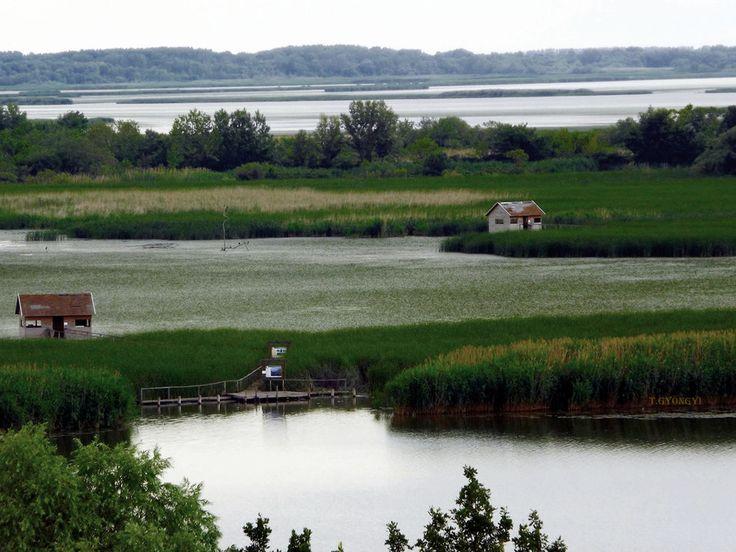 Photo Tisza-tó - látkép madárlesekkel by Gyöngyi Törökné on 500px