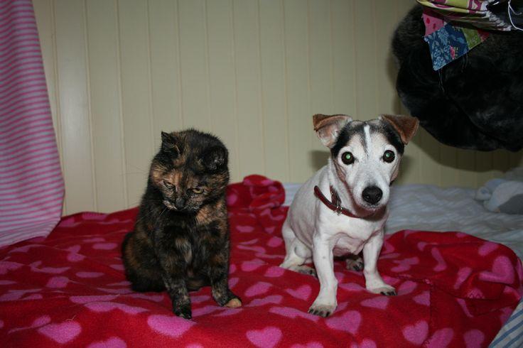 Amy de kat en Rusty onze hond