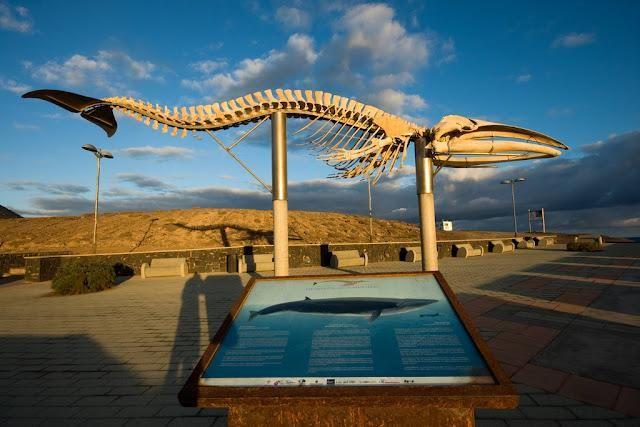 Esqueleto de ballena Rorcual Boreal (Balaenoptera borealis) en la Villa de Los Silos Tenerife