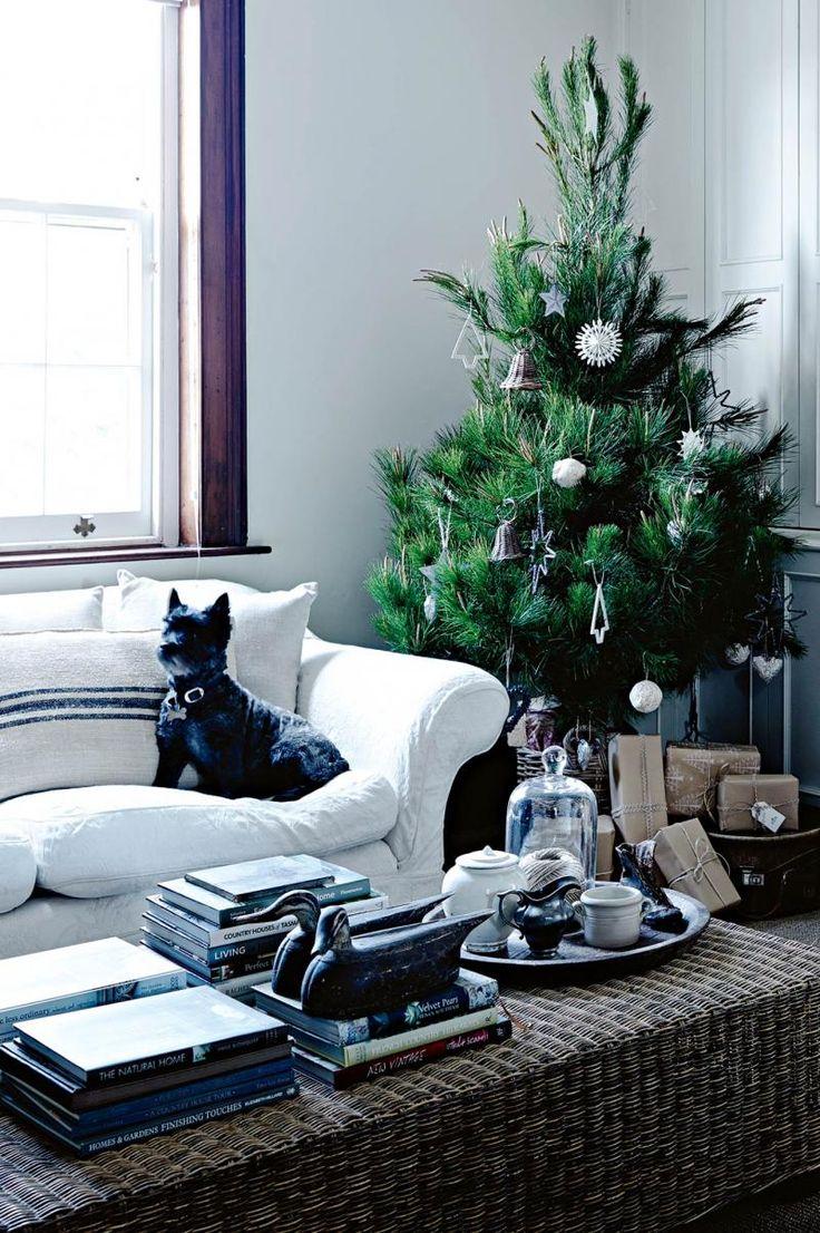 dog-sofa-closeup-ACXM14p30