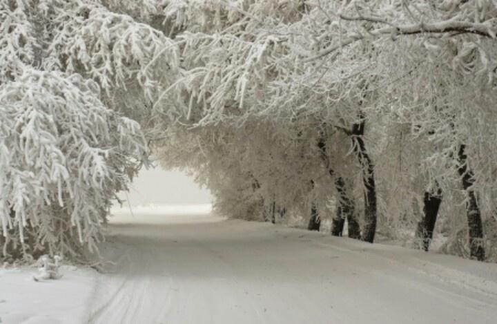 Pretty Winter Scene Perfect For Wedding Ceremony