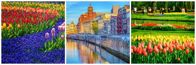 In viaggio verso...i Paesi Bassi #netherlands #amsterdam #olanda #flowers #windmill #travel