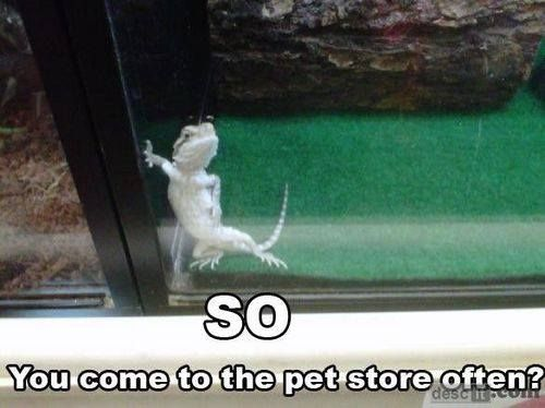 So...you come to the pet store often?