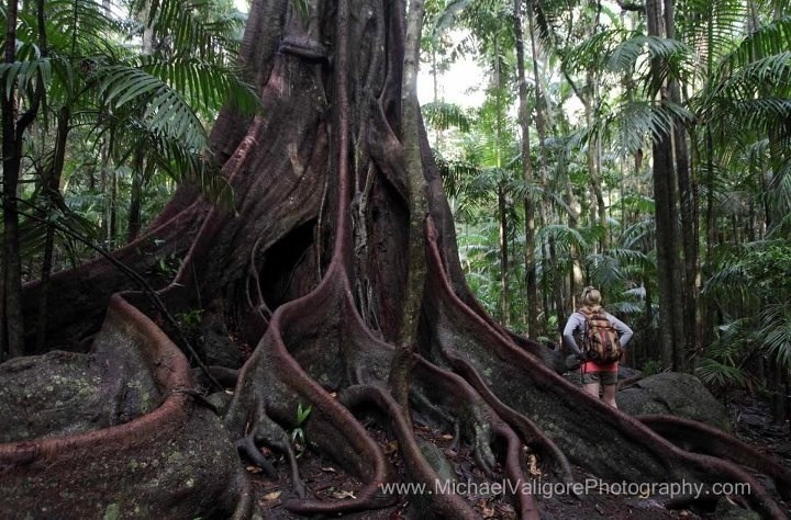 Gondwana Rainforest, Tamborine Mountain, Queensland