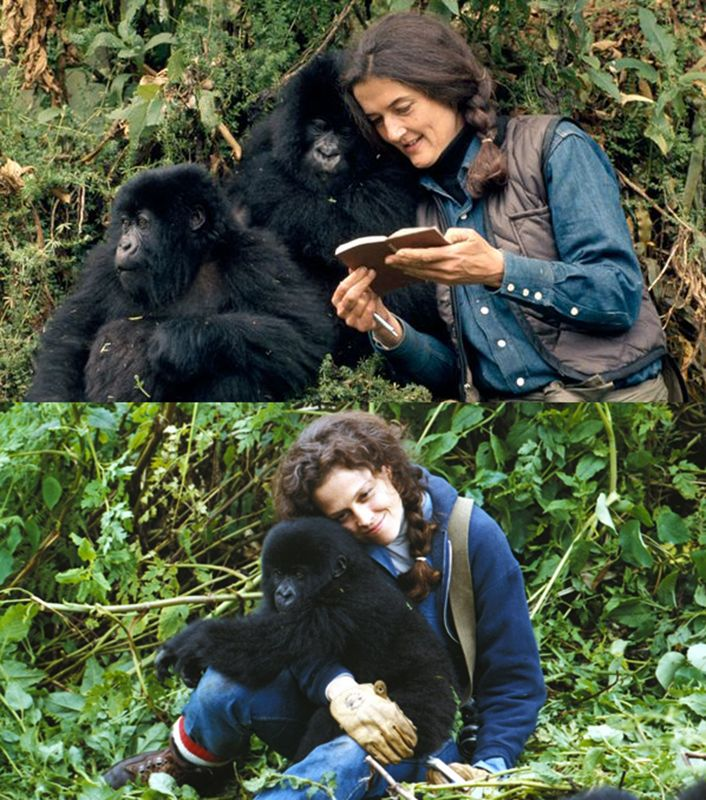 "The Tragic Life Of Dian Fossey And Her ""Gorillas In The Mist"""