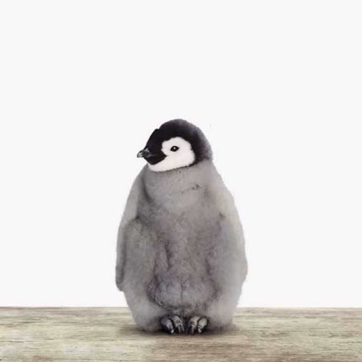 Dieser Baby Pinguin mit dem silbergrauen Daunenkleid läd zum Kuscheln ein, egal auf welches Material er gedruckt ist!