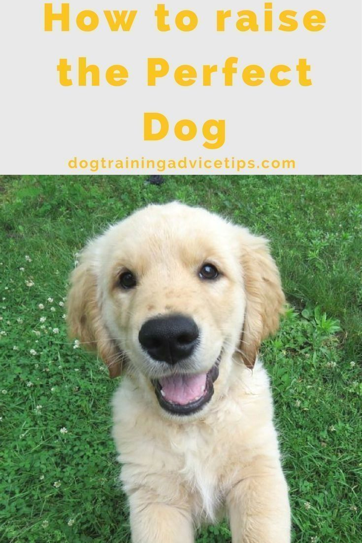 Dog Obedience Training Click The Pic For Lots Of Dog Care And