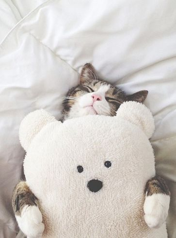 Kitty love hug for big old teddy bear.