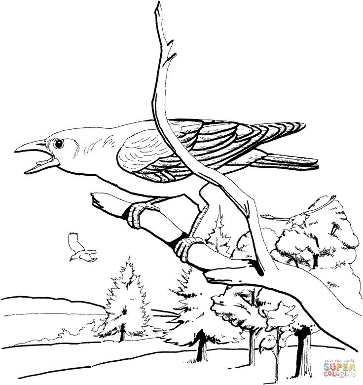 burgess animal book coloring pages - photo#12