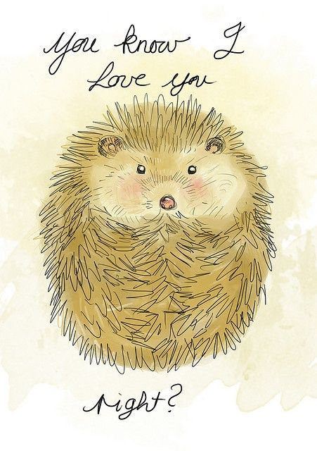 You know I love you, right? | hedgehog love|  The Honey Diaries