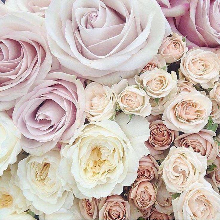 Gorgeous pastel palette of roses  just beautiful!  #roses #freshflowers #freshbloom #pinkroses #pastelroses #flowerlove #weddingblooms #weddingbouquet #weddingbouquets #bride #bridetobe #engaged #bridalbouquet #flowers