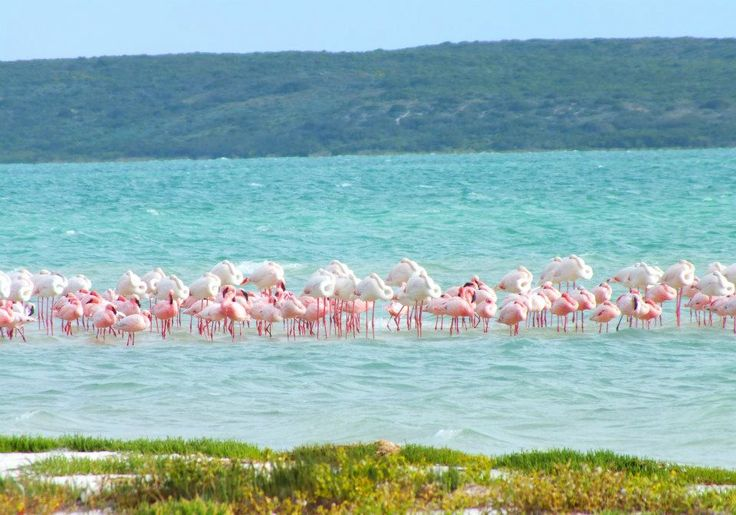 Flamingoes - Langebaan Lagoon  - BelAfrique your personal travel planner - www.BelAfrique.com
