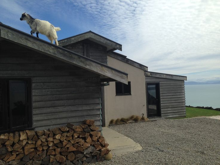 A goat on the roof!