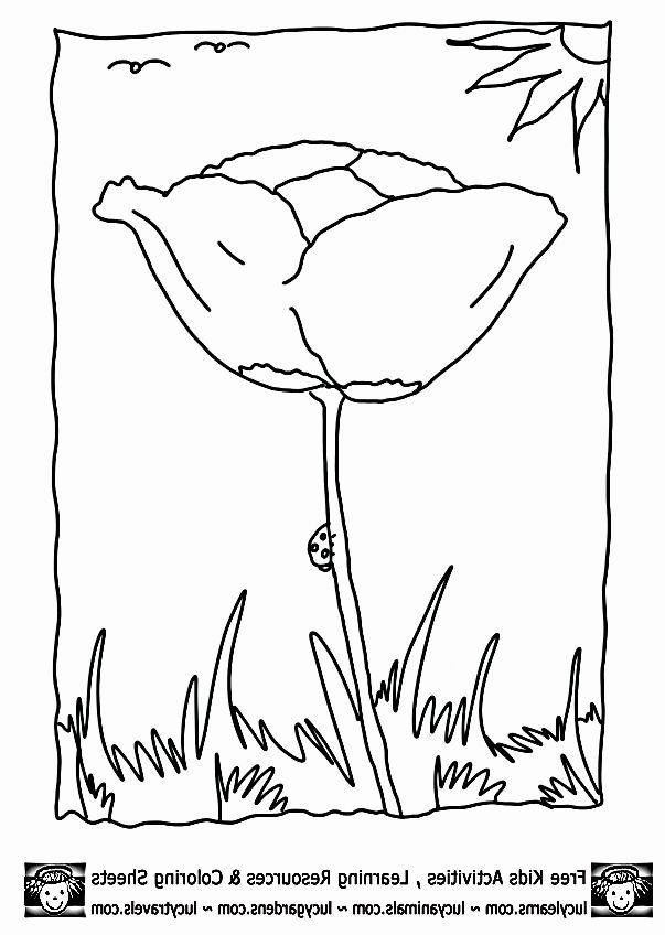 Hibernating Animals Coloring Pages in 2020 | Animals that ...
