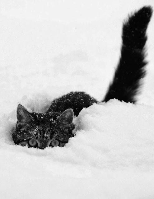 Our #fluffy friends take to the #snow in this adorable #winter photo album.: