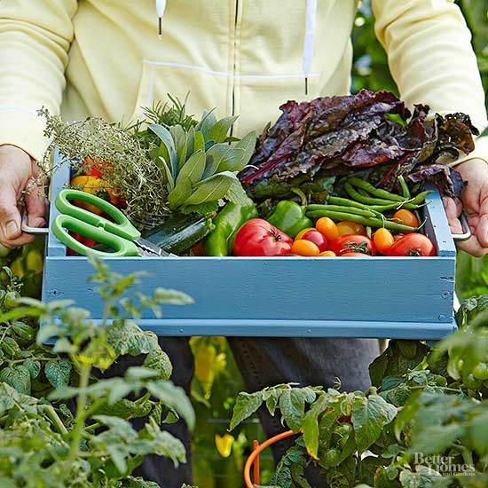 It's harvest time for your vegetable garden! Make hauling and harvesting your produce much easier with this DIY harvest tote. You only need a wooden crate to make this tote that will free up your hands.