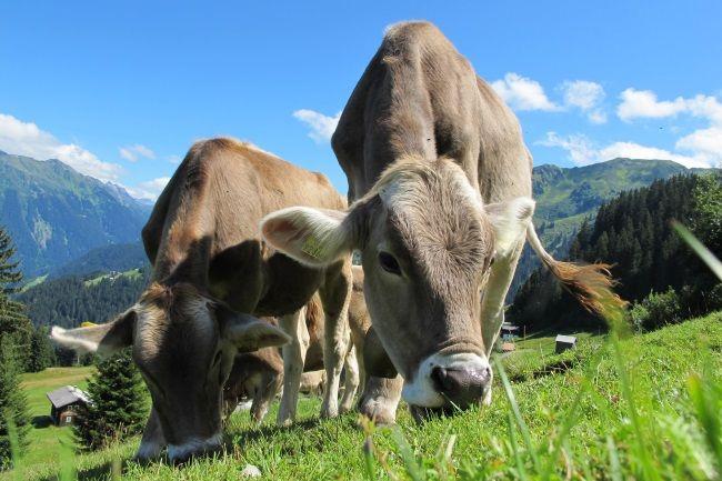dieta bez mleka,co jeść a czego nie