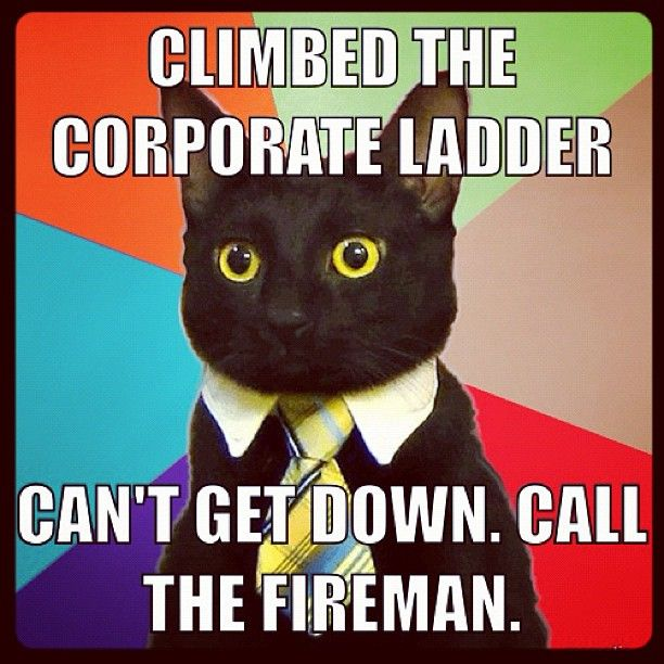 ea99416f3101168bf6e476032445c95a cat memes funny memes best 25 business cat meme ideas on pinterest funny cat humor,Get Down Cat Meme